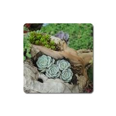 Plant Succulent Plants Flower Wood Square Magnet