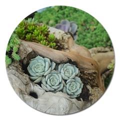 Plant Succulent Plants Flower Wood Magnet 5  (Round)