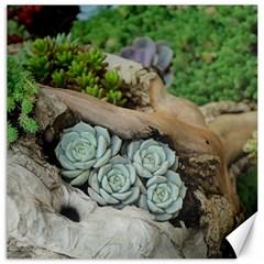 Plant Succulent Plants Flower Wood Canvas 16  x 16