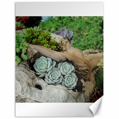 Plant Succulent Plants Flower Wood Canvas 18  x 24
