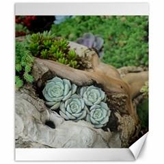 Plant Succulent Plants Flower Wood Canvas 20  x 24
