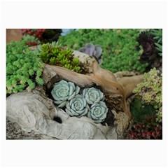 Plant Succulent Plants Flower Wood Large Glasses Cloth