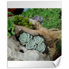 Plant Succulent Plants Flower Wood Canvas 11  x 14