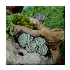 Plant Succulent Plants Flower Wood Face Towel