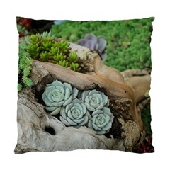 Plant Succulent Plants Flower Wood Standard Cushion Case (One Side)
