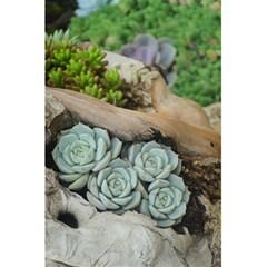 Plant Succulent Plants Flower Wood 5.5  x 8.5  Notebooks