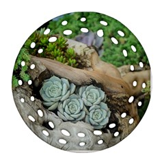 Plant Succulent Plants Flower Wood Ornament (Round Filigree)