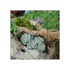 Plant Succulent Plants Flower Wood Acrylic Tangram Puzzle (4  x 4 )