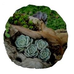 Plant Succulent Plants Flower Wood Large 18  Premium Round Cushions