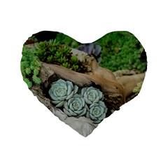 Plant Succulent Plants Flower Wood Standard 16  Premium Heart Shape Cushions