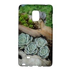 Plant Succulent Plants Flower Wood Galaxy Note Edge