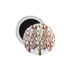 Magical autumn trees 1.75  Magnets