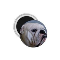 White Bulldog 1.75  Magnets