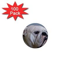 White Bulldog 1  Mini Magnets (100 pack)