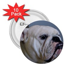White Bulldog 2.25  Buttons (10 pack)