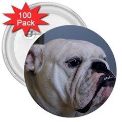 White Bulldog 3  Buttons (100 pack)