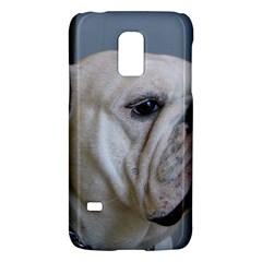 White Bulldog Galaxy S5 Mini