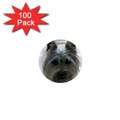 Cairn Terrier 1  Mini Magnets (100 pack)