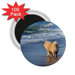 Chow Chow On Beach 2.25  Magnets (100 pack)