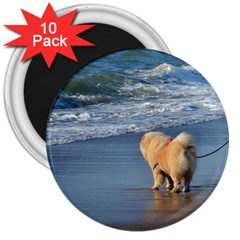 Chow Chow On Beach 3  Magnets (10 pack)