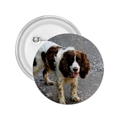 English Springer Spaniel Full 2.25  Buttons