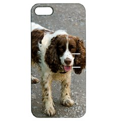 English Springer Spaniel Full Apple iPhone 5 Hardshell Case with Stand