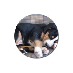 Greater Swiss Mountain Dog Puppy Magnet 3  (Round)