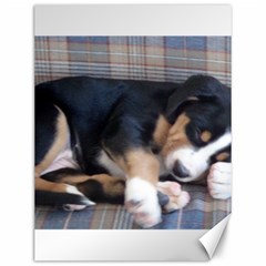 Greater Swiss Mountain Dog Puppy Canvas 12  x 16