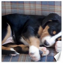 Greater Swiss Mountain Dog Puppy Canvas 20  x 20