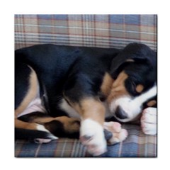 Greater Swiss Mountain Dog Puppy Face Towel