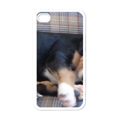 Greater Swiss Mountain Dog Puppy Apple iPhone 4 Case (White)