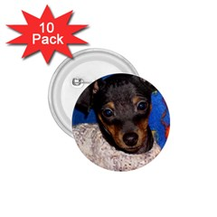 Min Pin In Sweater 1.75  Buttons (10 pack)