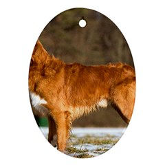 Duck Toller Full Oval Ornament (Two Sides)
