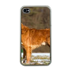 Duck Toller Full Apple iPhone 4 Case (Clear)