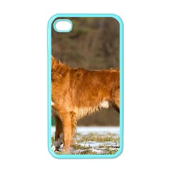 Duck Toller Full Apple iPhone 4 Case (Color)