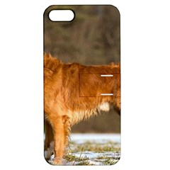 Duck Toller Full Apple iPhone 5 Hardshell Case with Stand