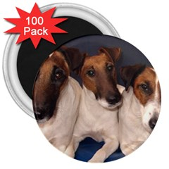 Smooth Fox Terrier Group 3  Magnets (100 pack)