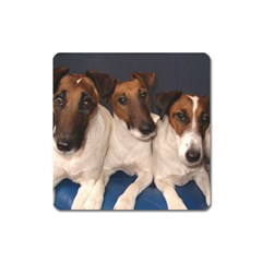 Smooth Fox Terrier Group Square Magnet