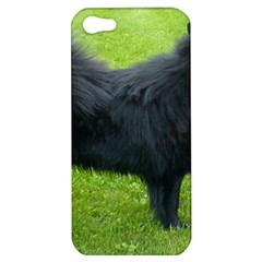 Swedish Lapphund Full Apple iPhone 5 Hardshell Case