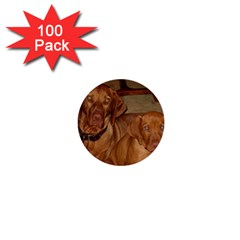 2 Vizslas 1  Mini Buttons (100 pack)