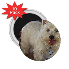 Westie Full 2.25  Magnets (10 pack)