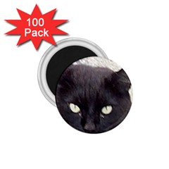 Manx 1.75  Magnets (100 pack)