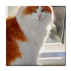Norwegian Forest Cat Sitting 4 Tile Coasters