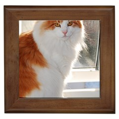 Norwegian Forest Cat Sitting 4 Framed Tiles