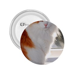 Norwegian Forest Cat Sitting 4 2.25  Buttons