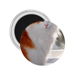 Norwegian Forest Cat Sitting 4 2.25  Magnets