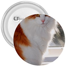 Norwegian Forest Cat Sitting 4 3  Buttons