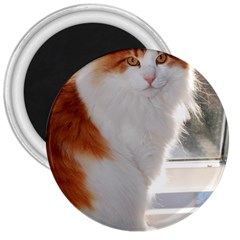 Norwegian Forest Cat Sitting 4 3  Magnets