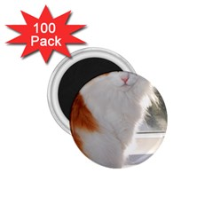 Norwegian Forest Cat Sitting 4 1.75  Magnets (100 pack)