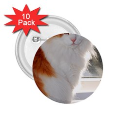 Norwegian Forest Cat Sitting 4 2.25  Buttons (10 pack)